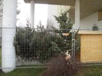 MonteLaa_Weihnachtsbaum-Verkauf-20121220_103255