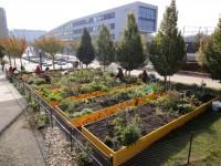 Gemeinschaftsgarten_Abschlussarbeiten2011-DSC07532